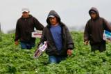 México entre los 5 países donde las remesas disminuirán en 2013