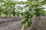 Aumenta Oaxaca un 23.4% actividades agropecuarias: SEDAFPA