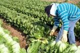 Casi 60% de la población es económicamente activa en México