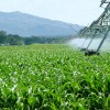 Alianza entre agroindustriales en Oaxaca
