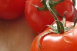 Se comercializará tomate fresco y de calidad en agencias y colonias de Oaxaca de Juárez