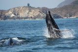 Fotografiamos ballenas en Oaxaca: MMOBiDiC
