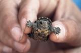 Mazunte: La reconciliación con la tortuga marina