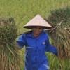 FAO planea censo agrícola global para 2016