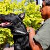 Programa de esterilización canina y felina en el municipio capitalino