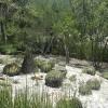 La Reserva de la Biósfera Tehuacán – Cuicatlán