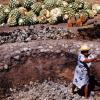 Prehispánicos destilaban mezcal: especialistas UNAM