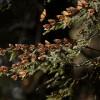 Aumenta 144% la presencia de la mariposa Monarca en los bosques mexicanos de hibernación