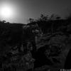 Las primeras fotos en alta calidad de un leopardo negro