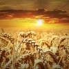 Hacia una agricultura preventiva y regenerativa