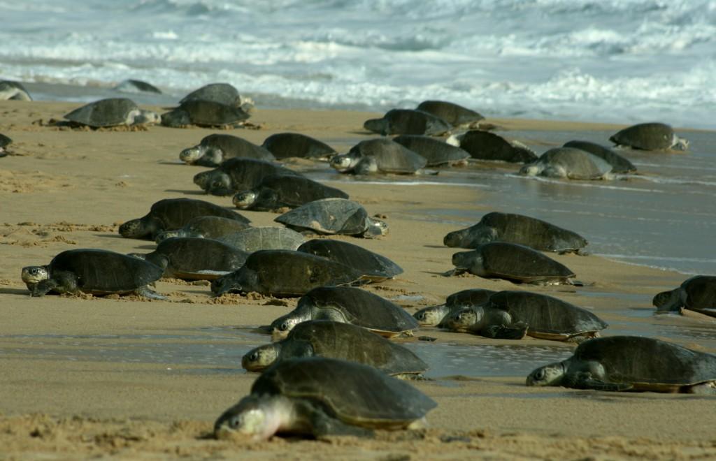 Resultado de imagen de mazunte oaxaca tortugas