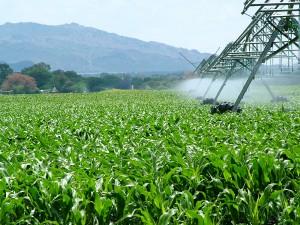 Agroindustria-Por Wikimedia