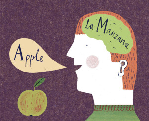 Credit Harriet Fuente: http://www.nytimes.com/2012/03/18/opinion/sunday/the-benefits-of-bilingualism.html?_r=0
