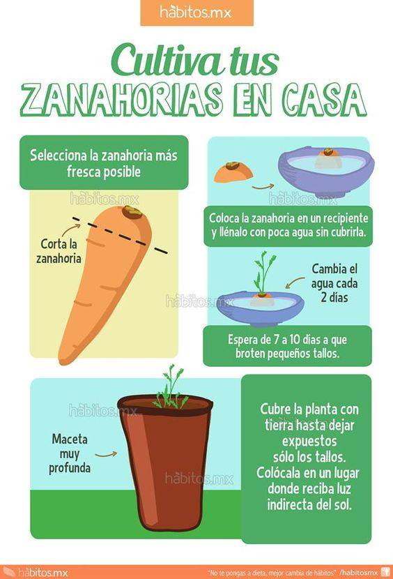Unorienteverde aprende a cultivar tus alimentos en casa for Que es la asociacion de cultivos