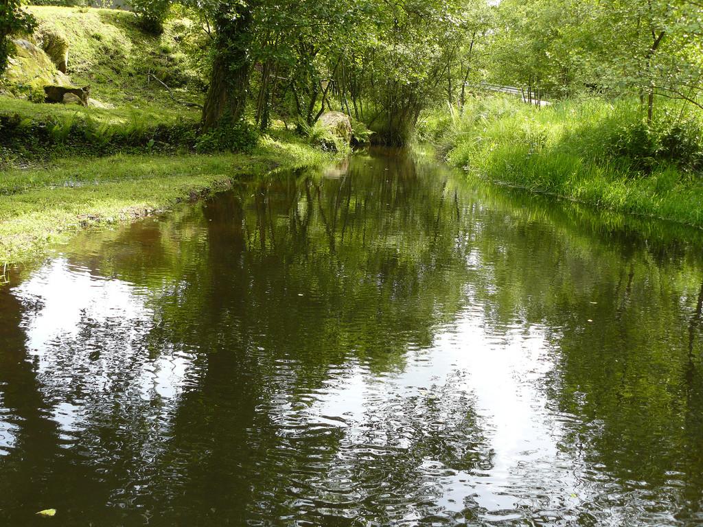agua bosque