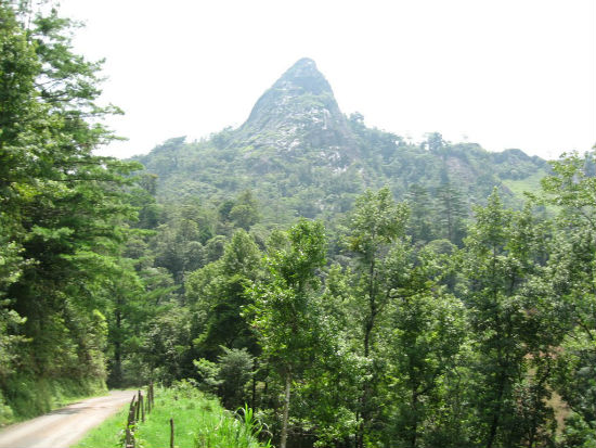 Guevea-de-Humboldt-ecoturismo-istmo-2
