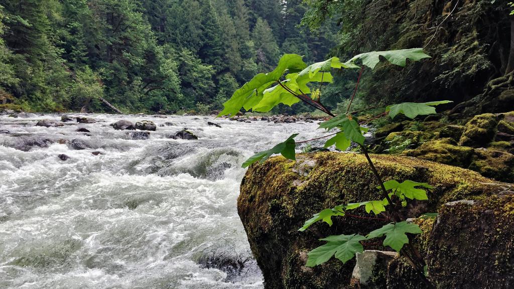 agua, río